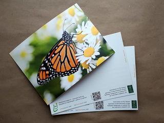 Бабочка на ромашке / Магазин маленьких радостей
