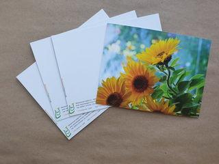 Sunflowers / Shop of little joys