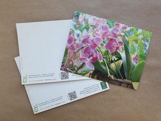 Orchids / Shop of little joys