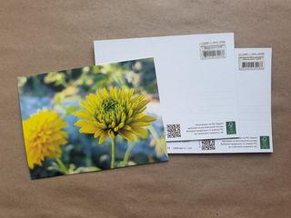 Желтый цветок / Магазин маленьких радостей