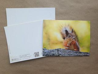 Squirrel / Shop of little joys