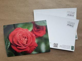 Red rose / Shop of little joys