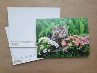 Cat in flowers / Shop of little joys
