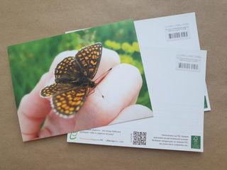 Бабочка на руке / Магазин маленьких радостей
