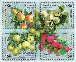 Сорта яблони / Shop of little joys