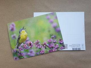 Bird's singing / Shop of little joys