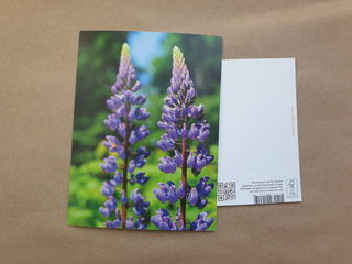 Brothers lupines / Shop of little joys