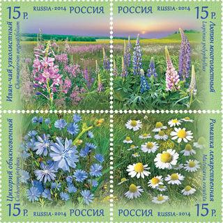 Полевые цветы / Магазин маленьких радостей