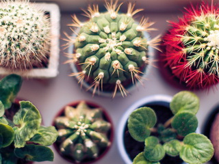 Cactuses / Shop of little joys