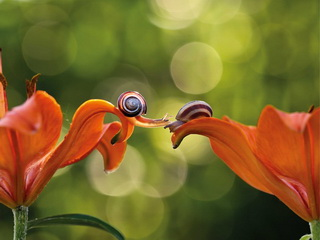 Snails on lilies / Shop of little joys