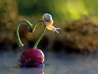 Snail on heart / Shop of little joys