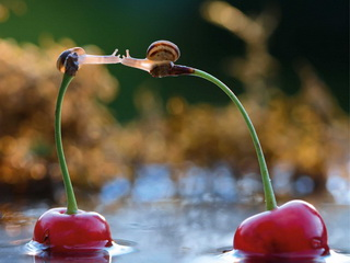Snails on cherries / Shop of little joys