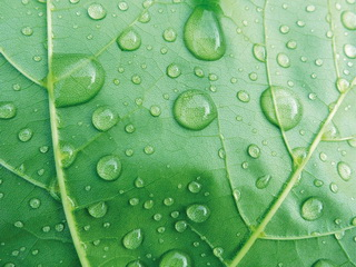 Drops on leaf / Shop of little joys