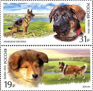 Служебные породы собак / Магазин маленьких радостей