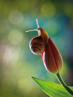 Snail on tulip / Shop of little joys