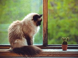 Кот и кактус / Магазин маленьких радостей