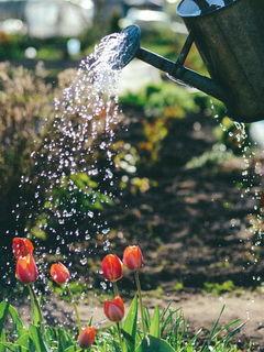 Поливать тюльпаны / Магазин маленьких радостей