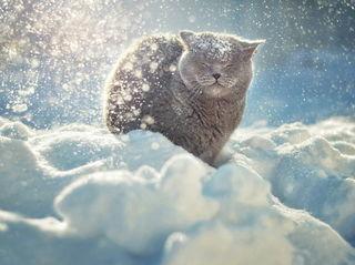 Кот в снегу / Shop of little joys