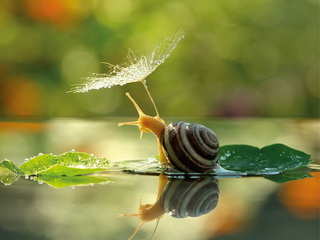 Snail with umbrella / Shop of little joys