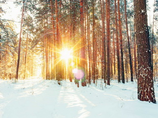 Frost and sun / Shop of little joys