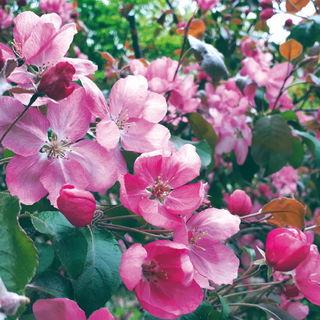 Розовое цветение / Магазин маленьких радостей